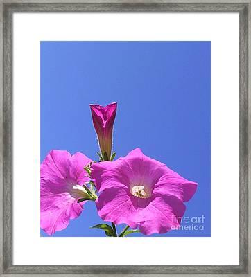 Flowering To Life I Framed Print by Daniel Henning