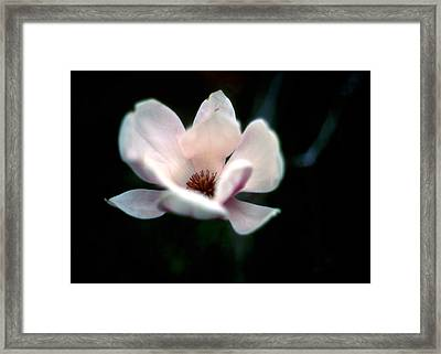Flowering Tree Framed Print by Kim Blumenstein