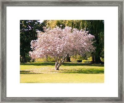 Flowering Tree Framed Print by Mark Barclay