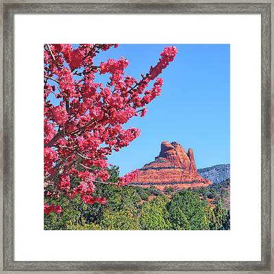 Flowering Tree - Sedona Red Rock Framed Print