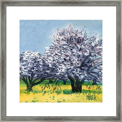 Flowering Walnut And Mustard Framed Print by Donald Maier