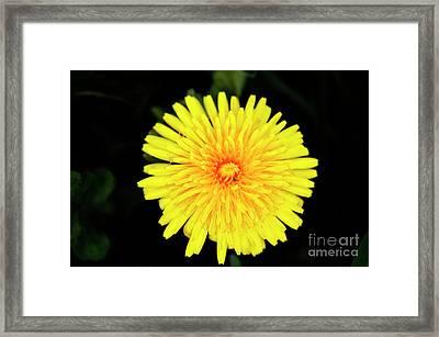 Flowering Weed Framed Print