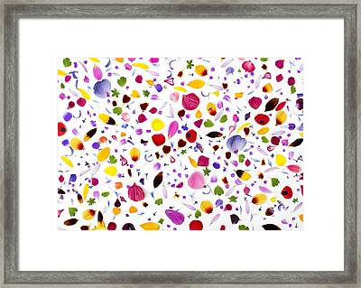 Flowermania Framed Print by Tim Gainey