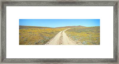 Flowers & Poppies, Antelope Valley Framed Print by Panoramic Images