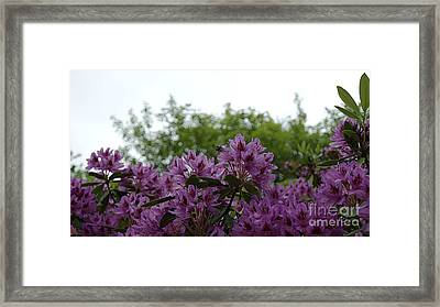 Bee In The Flowers 1 Framed Print by LDS Dya