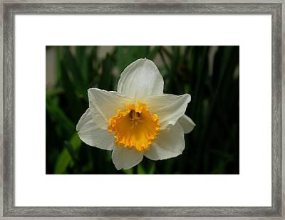 Flowers 150 Framed Print by Joyce StJames