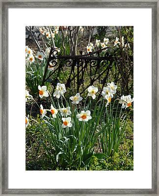 Flowers 157 Framed Print by Joyce StJames
