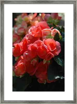 Flowers 160 Framed Print by Joyce StJames