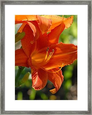 Flowers 190 Framed Print by Joyce StJames