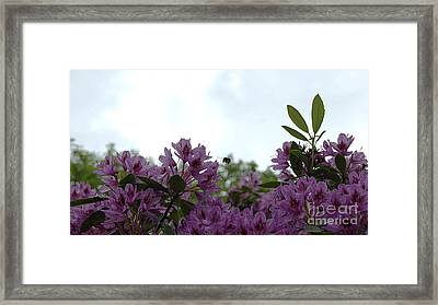 Bee In The Flowers 2 Framed Print by LDS Dya
