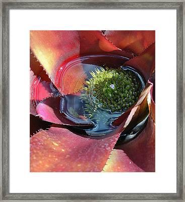 Flowers 8 15 Framed Print