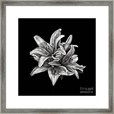 Flowers 8449 Framed Print