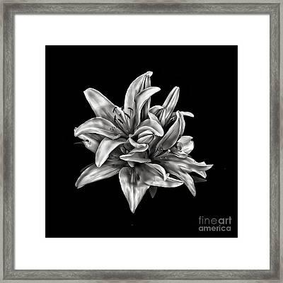 Flowers 8449 Framed Print by Walt Foegelle