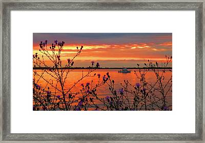 Flowers Along The Shore At Tibbetts Point  Framed Print