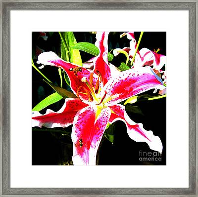 Flowers And Bees Framed Print by Jerome Stumphauzer
