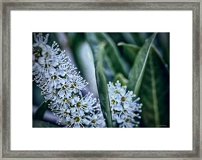 Flowers And Flowers Framed Print