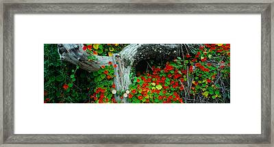 Flowers And Log, Route 1, Northern Framed Print by Panoramic Images