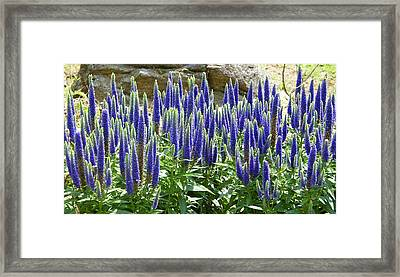 Flowers And Rock Framed Print by Margaret G Calenda