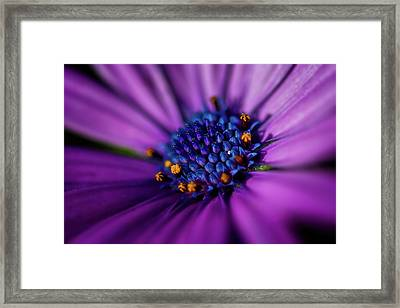 Framed Print featuring the photograph Flowers And Sand by Darren White