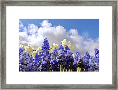 Flowers And Sky Framed Print