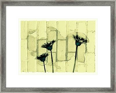 Flowers And The Brick Wall Framed Print by Susan Stone