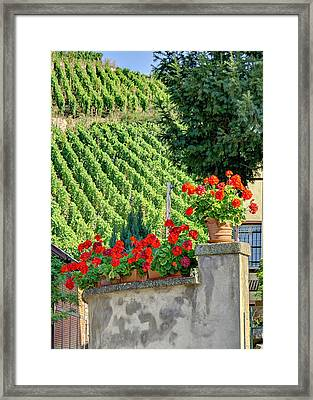 Framed Print featuring the photograph Flowers And Vines by Alan Toepfer