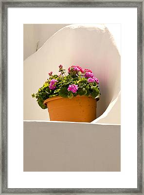 Flowers And White Wall Framed Print by Xavier Cardell