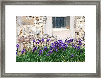 Flowers And Worn House Framed Print by Kathy Gibbons