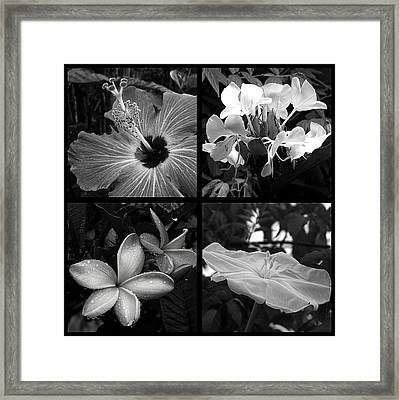 Flowers Framed Print by Andre Panatto
