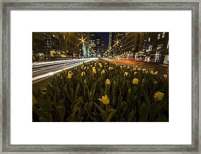 Flowers At Night On Chicago's Mag Mile Framed Print