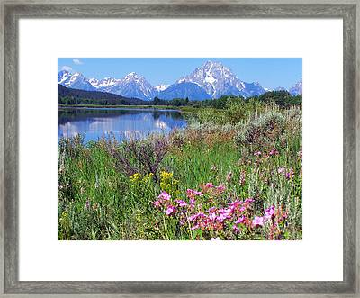 Flowers At Oxbow Bend Framed Print by Marty Koch