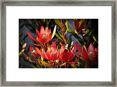 Framed Print featuring the photograph Flowers At Sunset by AJ Schibig