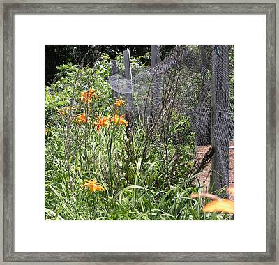 Flowers At The Farm Framed Print by Janis Beauchamp