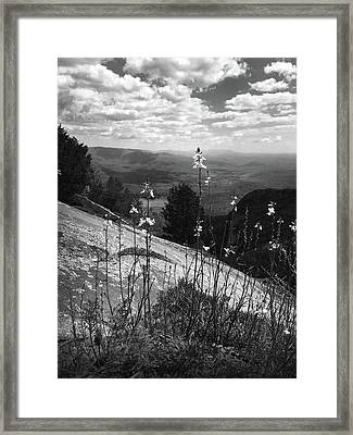 Flowers At The Top Of Table Rock Trail Framed Print by Kelly Hazel