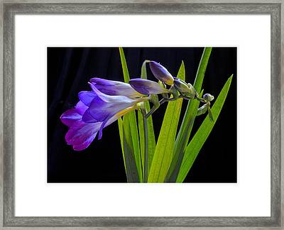 Flowers Backlite. Framed Print