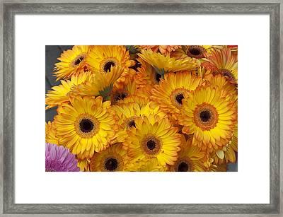 Flowers Bo71 Framed Print by Charles  Ridgway