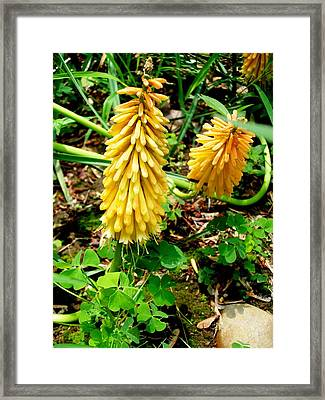 Flowers By The Door Framed Print by Fareeha Khawaja