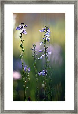 Flowers By The Pond Framed Print