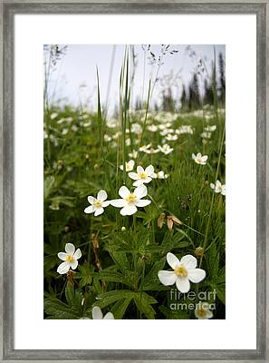 Flowers Everywhere Framed Print