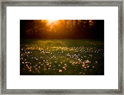 Flowers  Framed Print by Evgeny Vasenev