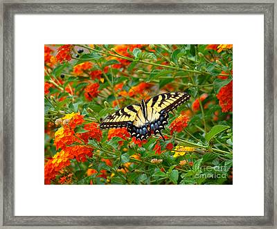 Flowers For Butterflies Framed Print by Sue Melvin