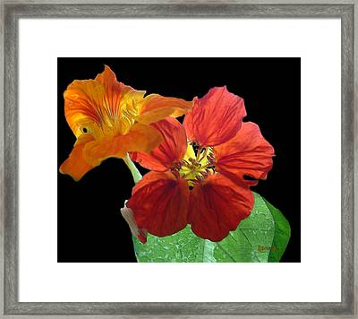 Flowers For Ebie Framed Print by RC deWinter