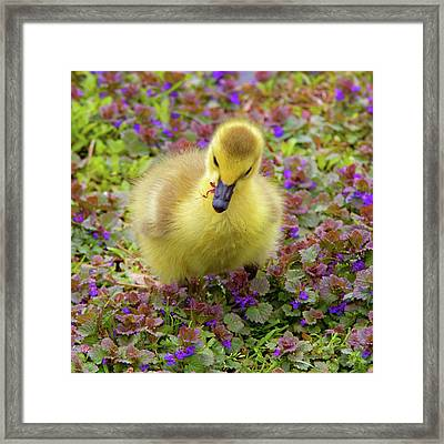 Flowers For Lunch Framed Print