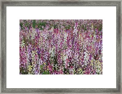 Flowers Forever Framed Print by Carol Groenen