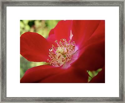 Flowers Garden Framed Print by Jeremy Martinson