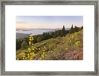 Flowers Height Of Land Framed Print by Peter J Sucy