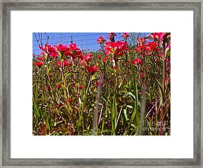 Flowers High Framed Print by Chuck Taylor