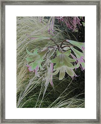 Flowers In Berkeley Framed Print