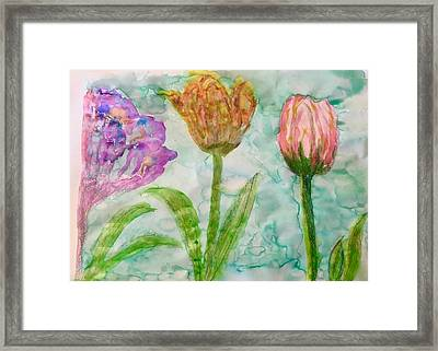 Tulips A'bloom Framed Print