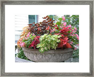 Flowers In Cement Vase Framed Print by Gregory Jeffries